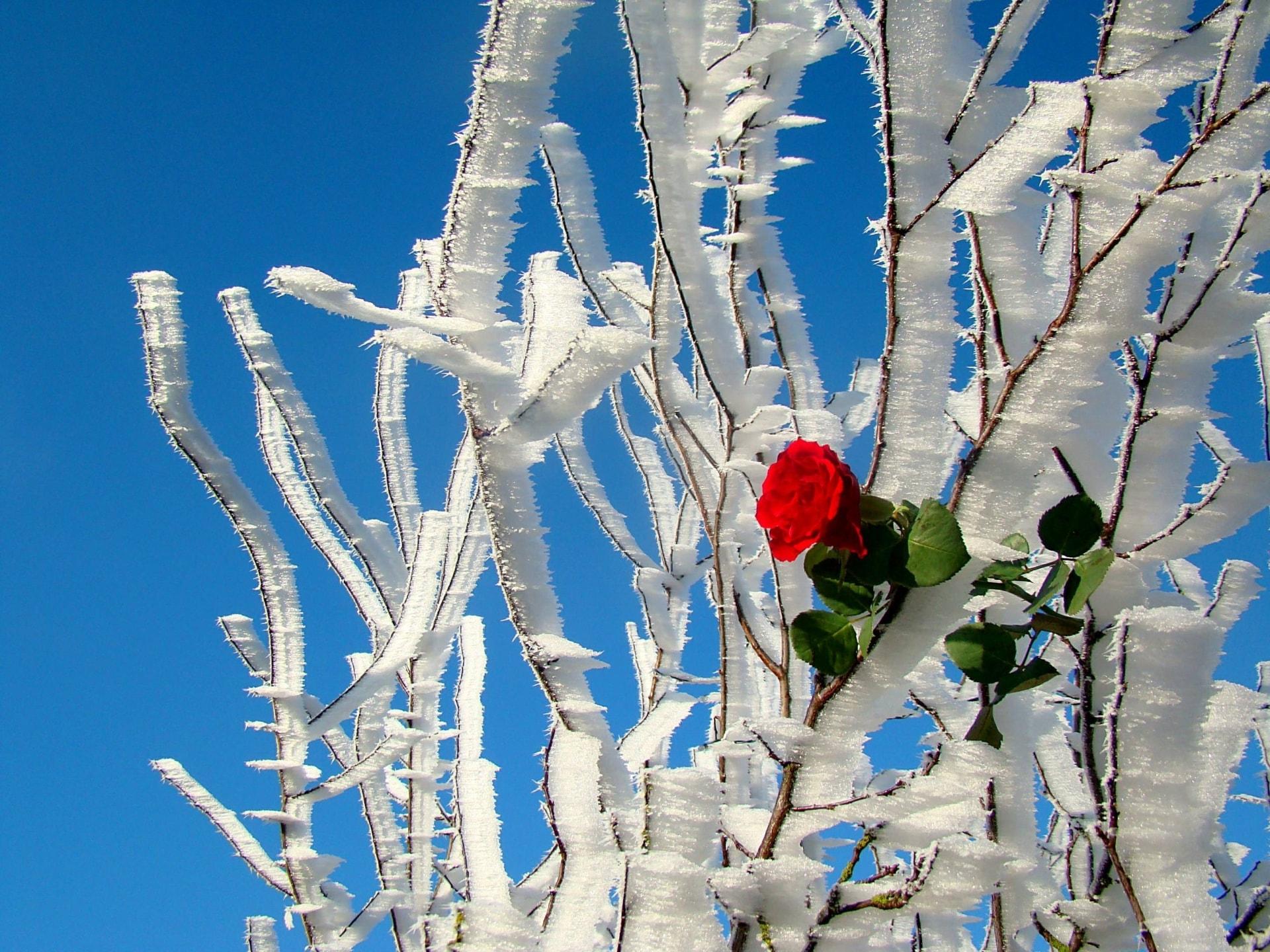 Winter1-Big